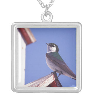 USA, Oregon. Violet-Green Swallow Tachycineta Silver Plated Necklace