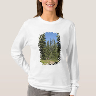 USA, Oregon, Willamette National Forest, Fall T-Shirt