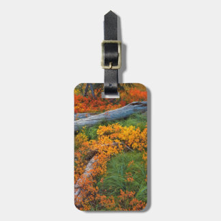 USA, Oregon, Willamette National Forest Luggage Tag
