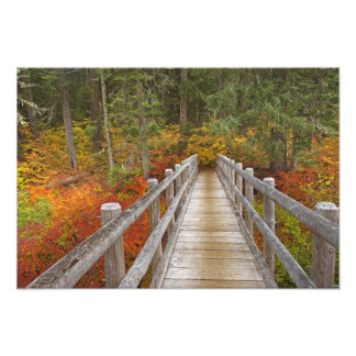 USA, Oregon, Willamette National Forest. Photo Print