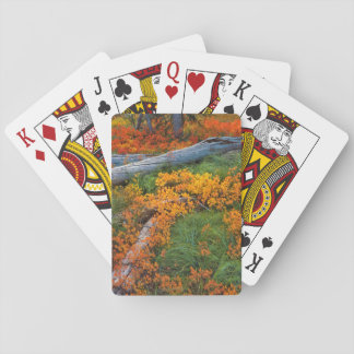 USA, Oregon, Willamette National Forest Playing Cards