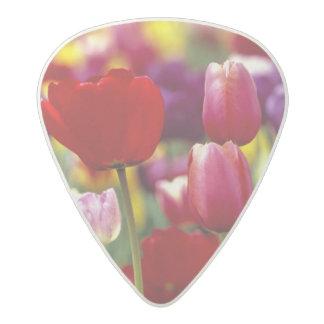 USA, Oregon, Willamette Valley. Beautiful Acetal Guitar Pick