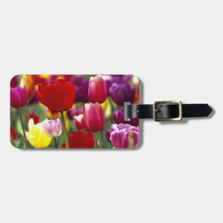 USA, Oregon, Willamette Valley. Beautiful Luggage Tag