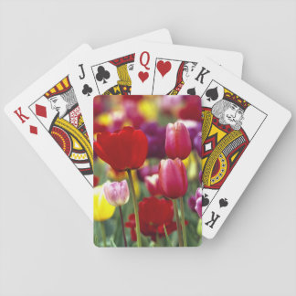 USA, Oregon, Willamette Valley. Beautiful Playing Cards