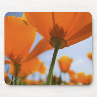 USA, Oregon, Willamette Valley, Close UP of 2 Mouse Pad
