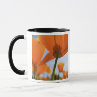 USA, Oregon, Willamette Valley, Close UP of 2 Mug