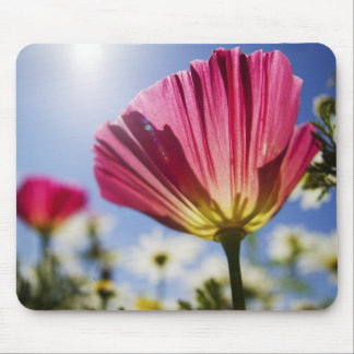 USA, Oregon, Willamette Valley, Close UP of Mouse Mat