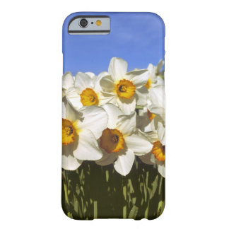 USA, Oregon, Willamette Valley. Daffodils grow Barely There iPhone 6 Case