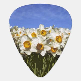 USA, Oregon, Willamette Valley. Daffodils grow Guitar Pick