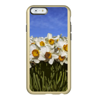 USA, Oregon, Willamette Valley. Daffodils grow Incipio Feather® Shine iPhone 6 Case