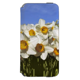 USA, Oregon, Willamette Valley. Daffodils grow Incipio Watson™ iPhone 6 Wallet Case