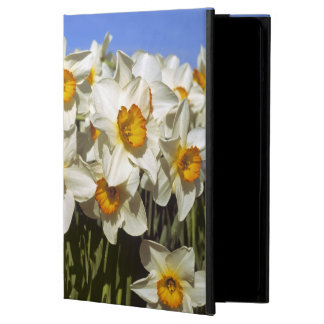 USA, Oregon, Willamette Valley. Daffodils grow iPad Air Cover