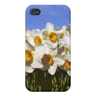 USA, Oregon, Willamette Valley. Daffodils grow iPhone 4/4S Covers