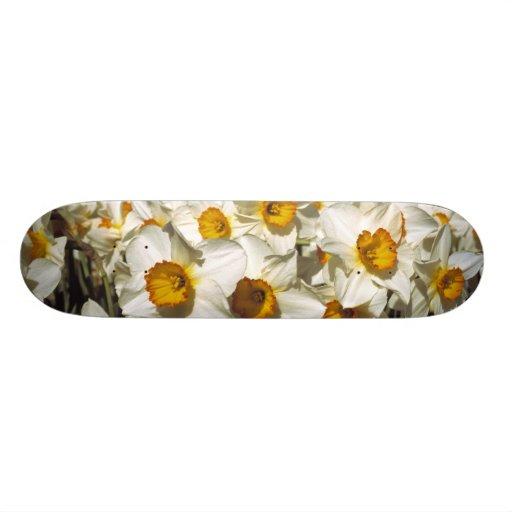 USA, Oregon, Willamette Valley. Daffodils grow Skate Board