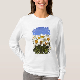 USA, Oregon, Willamette Valley. Daffodils grow T-Shirt