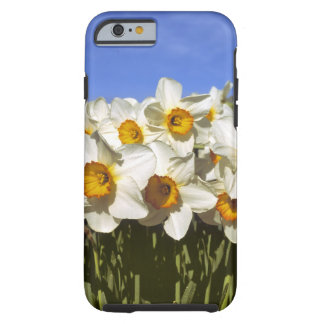 USA, Oregon, Willamette Valley. Daffodils grow Tough iPhone 6 Case