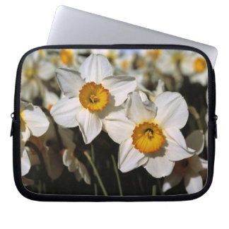 USA, Oregon, Willamette Valley. Daffodils Laptop Sleeve