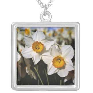 USA, Oregon, Willamette Valley. Daffodils Silver Plated Necklace