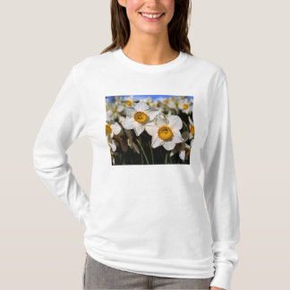 USA, Oregon, Willamette Valley. Daffodils T-Shirt