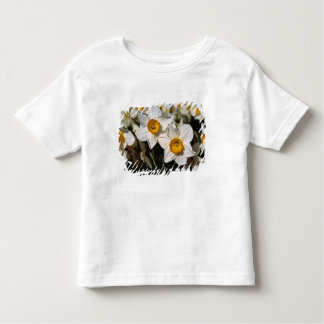 USA, Oregon, Willamette Valley. Daffodils Toddler T-Shirt