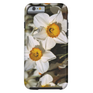 USA, Oregon, Willamette Valley. Daffodils Tough iPhone 6 Case