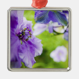 USA, Oregon, Willamette Valley, Larkspur Close 2 Silver-Colored Square Decoration