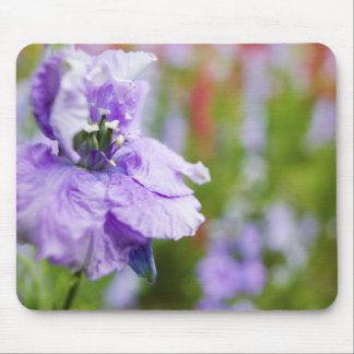 USA, Oregon, Willamette Valley, Larkspur Close 3 Mouse Pad