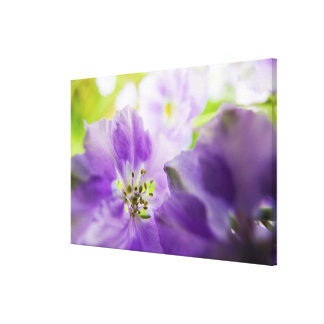 USA, Oregon, Willamette Valley, Larkspur Close Canvas Print