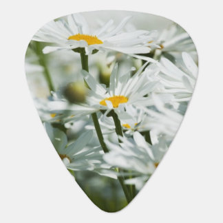 USA, Oregon, Willamette Valley, Selective Guitar Pick