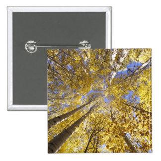 USA, Pacific Northwest. Aspen trees in autumn 15 Cm Square Badge