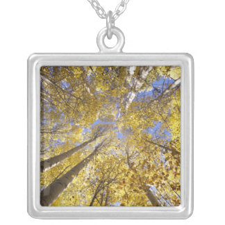 USA, Pacific Northwest. Aspen trees in autumn Silver Plated Necklace