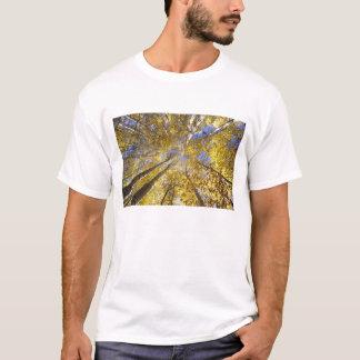 USA, Pacific Northwest. Aspen trees in autumn T-Shirt