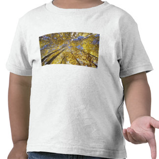 USA, Pacific Northwest. Aspen trees in autumn Tee Shirt