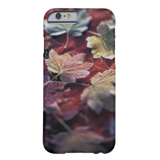 USA, Pacific Northwest. Japanese maple leaves Barely There iPhone 6 Case