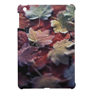 USA, Pacific Northwest. Japanese maple leaves Case For The iPad Mini