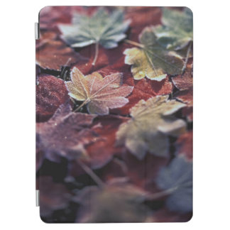USA, Pacific Northwest. Japanese maple leaves iPad Air Cover