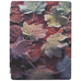 USA, Pacific Northwest. Japanese maple leaves iPad Cover