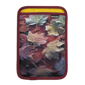 USA, Pacific Northwest. Japanese maple leaves iPad Mini Sleeve