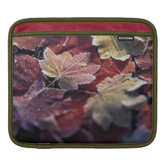USA, Pacific Northwest. Japanese maple leaves iPad Sleeve