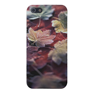 USA, Pacific Northwest. Japanese maple leaves iPhone 5 Cover
