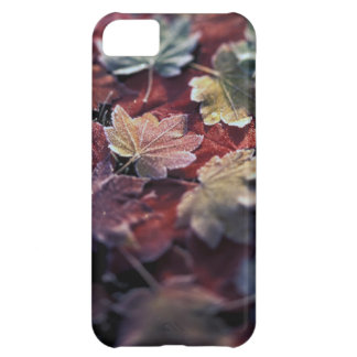 USA, Pacific Northwest. Japanese maple leaves iPhone 5C Case