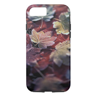 USA, Pacific Northwest. Japanese maple leaves iPhone 7 Case