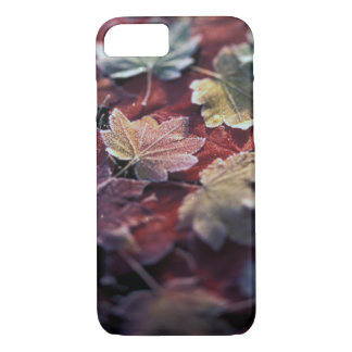 USA, Pacific Northwest. Japanese maple leaves iPhone 8/7 Case