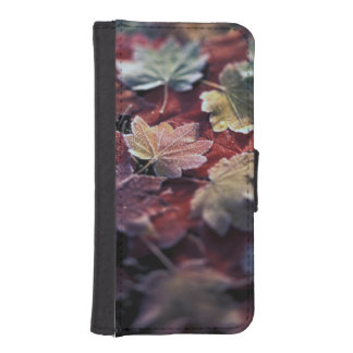 USA, Pacific Northwest. Japanese maple leaves iPhone SE/5/5s Wallet Case