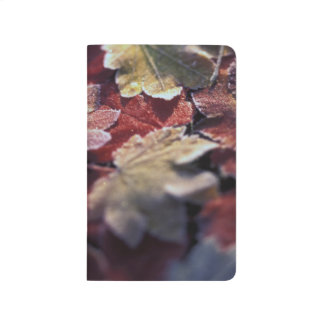 USA, Pacific Northwest. Japanese maple leaves Journal