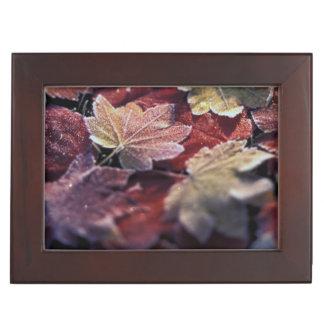 USA, Pacific Northwest. Japanese maple leaves Keepsake Box