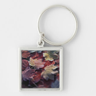 USA, Pacific Northwest. Japanese maple leaves Key Chains
