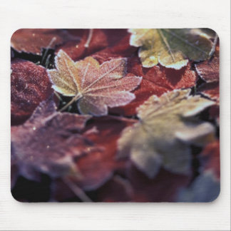 USA, Pacific Northwest. Japanese maple leaves Mouse Mat