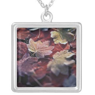 USA, Pacific Northwest. Japanese maple leaves Silver Plated Necklace