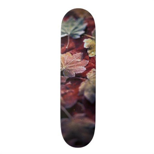 USA, Pacific Northwest. Japanese maple leaves Skateboards